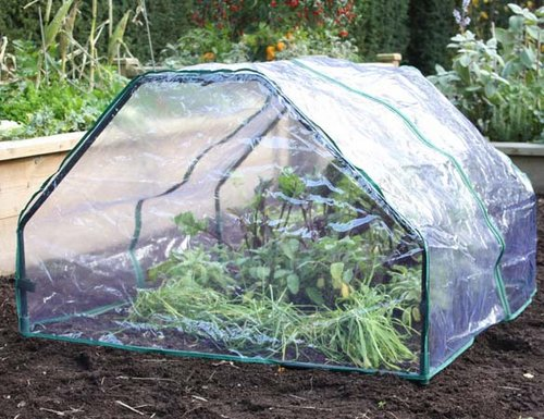 cloches winter protection