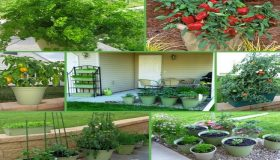 Use The Available Space For Your Kitchen Garden