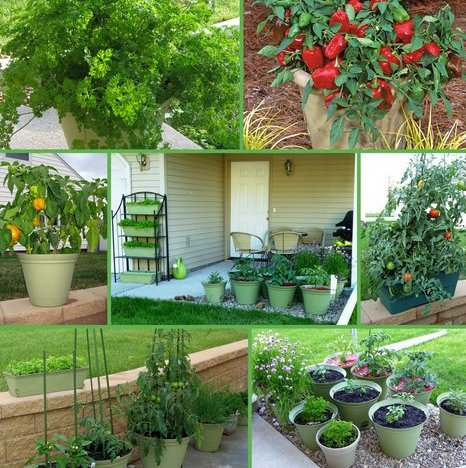 Projects for small space gardens amazing of outdoor for Small kitchen garden