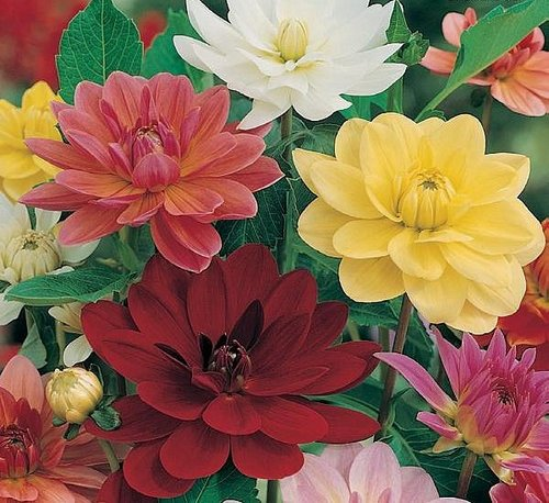 4 Tips to planting seasonal flowers