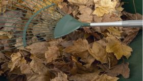 Readying Your Garden For Winter