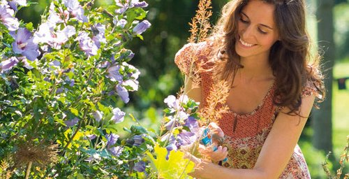 Gardening cutting flowers