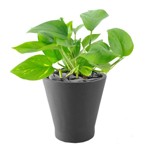 Indoor Plants That Clean The Air Www Coolgarden Me