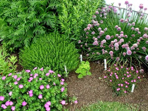 High Quality Planting A Formal Herb Garden Amazing Ideas
