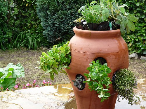 Plant Your Herb Garden wwwcoolgardenme