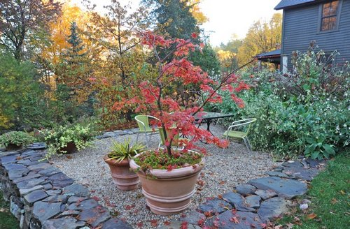 JapaneseMaple-potted-container