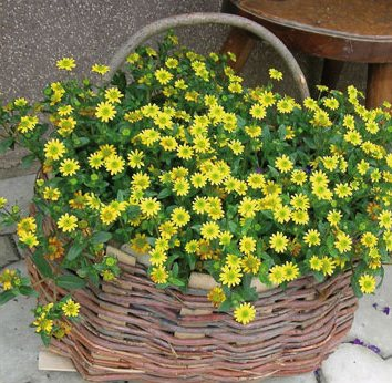 plant-in-basket