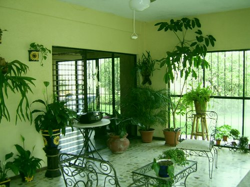 Indoor plants that clean the air - Decorate home with plants ...