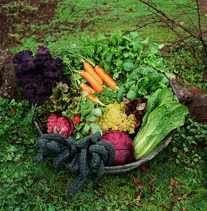Make a vegetable garden at your backyard for Ideas for growing vegetables