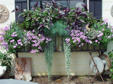 window-box-flowers431