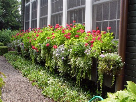 window box spiller