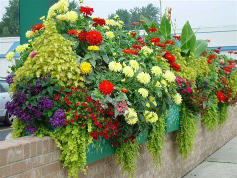 window-box-flowers433