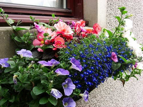 window-boxes-flowers-main