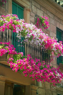window-boxes-flowers32