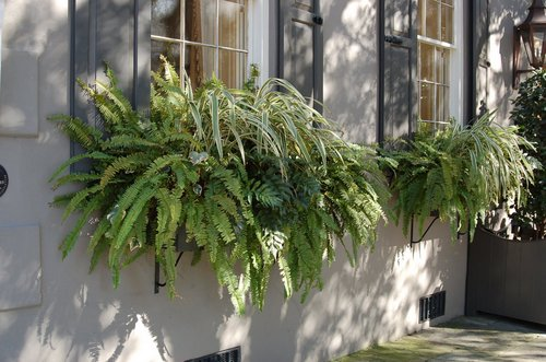 window-boxes-plants-green