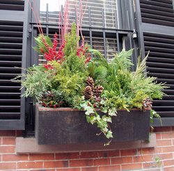 window box in winter