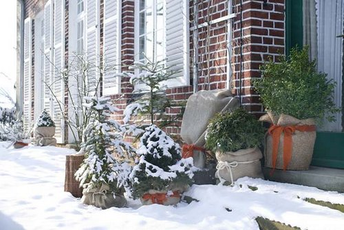winter protecting plants