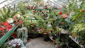 The Perfect Garden Greenhouse
