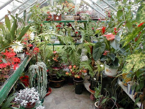 Greenhouse-Garden inside