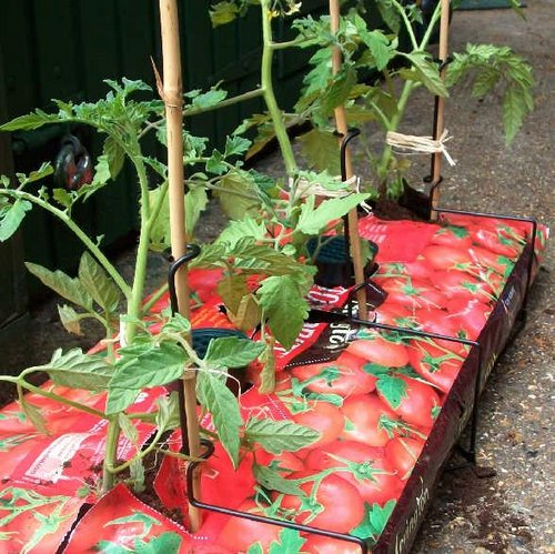growbags-tomatoes