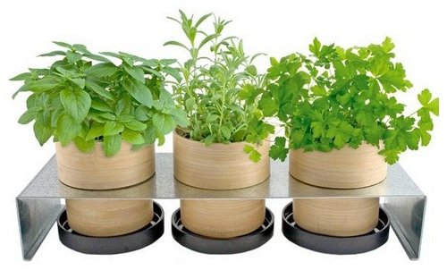 pot-bamboo-holders