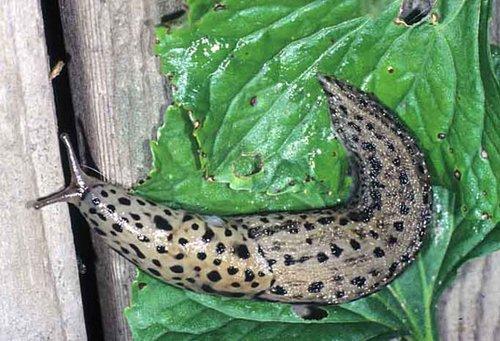 slug-garden