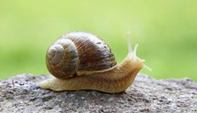 Gardening Tips – Slugs And Snails Damage In The Garden