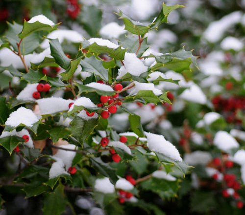 Gardening Tips Help Your Winter Garden Survive The Cold www