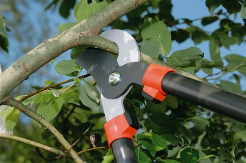 pruning-trees