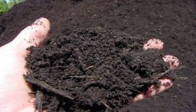 Organic Garden: Soil Preparation Tips