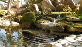 Garden Design – Having A  Beautiful  Water Garden