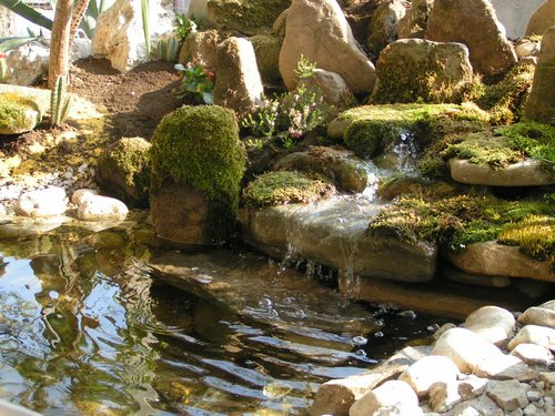 Water Garden Design garden design - having a beautiful water garden | www.coolgarden