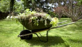 Beat The Weeds In Your Garden!
