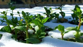 Garden In Late Winter: Preparing For Spring Planting
