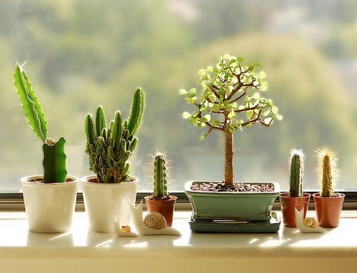 cactus-windows-decor