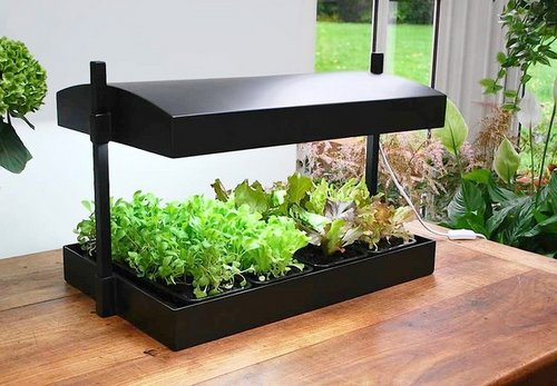 Indoor Growing Plants | www.coolgarden.me