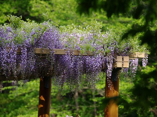 Pergola-flowers - Pergola Ideas For Your Garden
