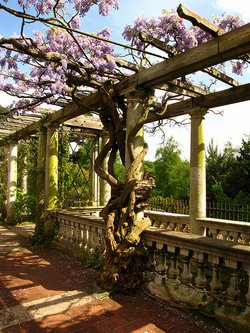 Pergola Ideas For Your Garden