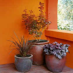 plants-containers