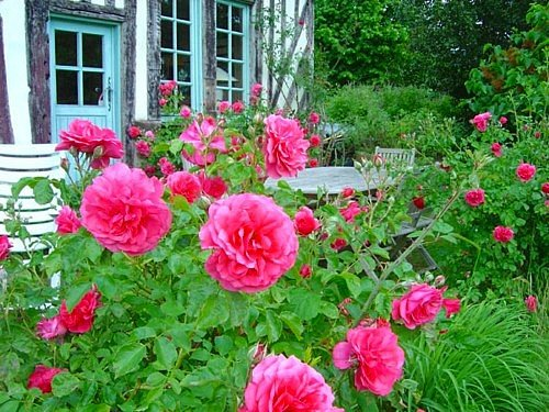Designing a beautiful flower garden for Garden design with roses