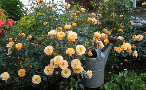 Designing a beautiful flower garden - Fall landscaping ideas a mosaic of colors shapes and scents ...