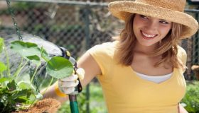 Natural Remedies Against Garden Pests