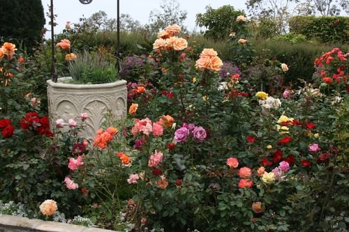 Rose Garden Design garden design rose garden Garden Design With Design Your Own Rose Garden Wwwcoolgardenme With Pictures Of