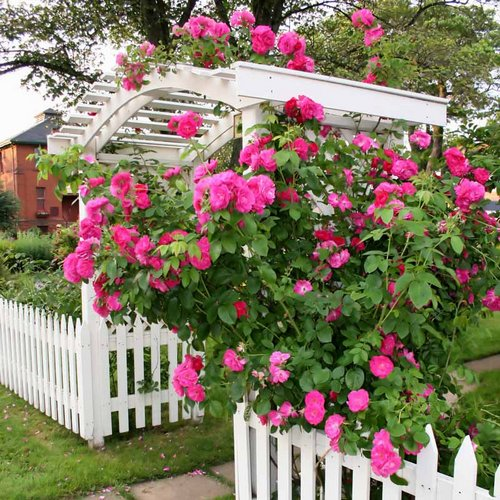 Landscaping Ideas Rose Garden : Rose garden