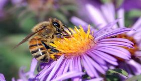 Outdoor Plants For Bee-friendly Garden