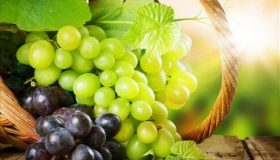 Fruit Plants: Growing Grapes On Your Own