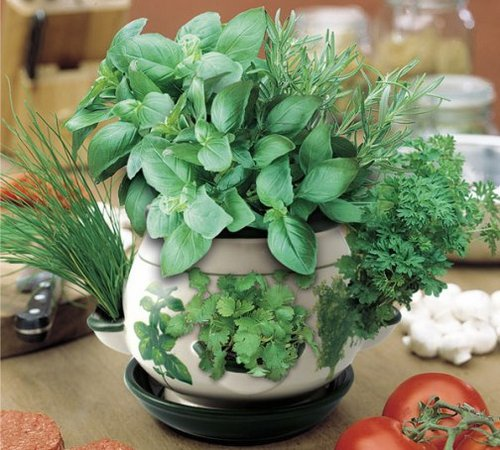 indoor-herbs2