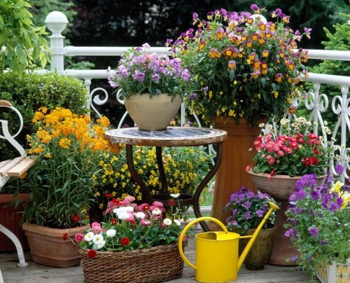 Choose Summer Flowers For Your Garden wwwcoolgardenme