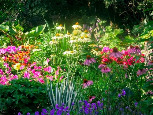 Choose Summer Flowers For Your Garden