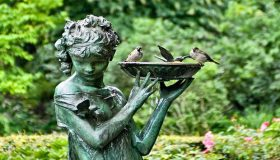 Attract Birds In Your Garden